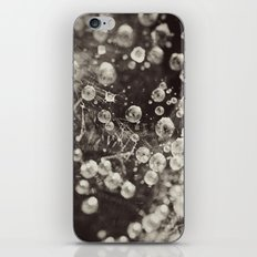 Caught In A Spiders Web iPhone & iPod Skin