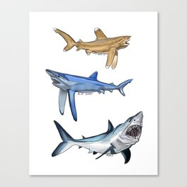 Mako Blue White Tip Sharks Canvas Print