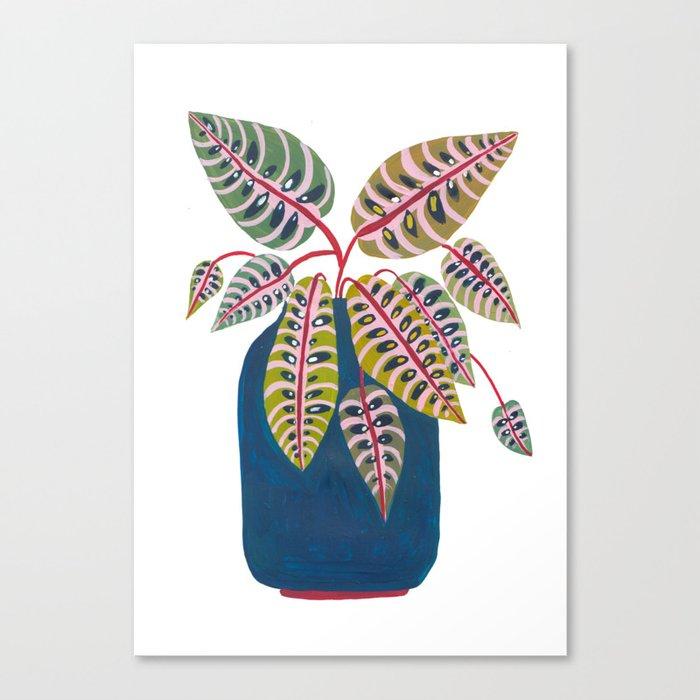 Potted Prayer Plant Canvas Print