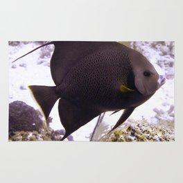 Black Angelfish From Side Rug