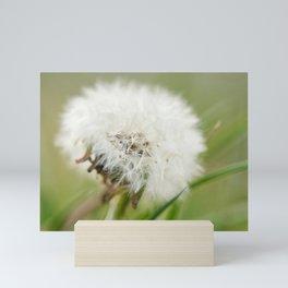 Dandelion / Taraxacum Mini Art Print