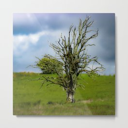The Dream of the Day Metal Print