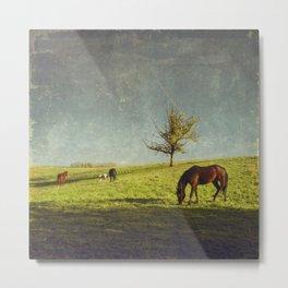 equine idyll Metal Print