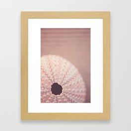 pink urchin Framed Art Print