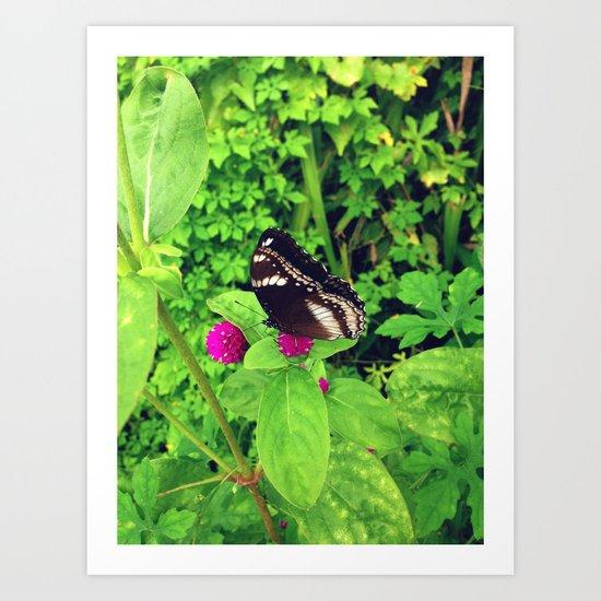 Butterfly & Globe Amaranth Art Print