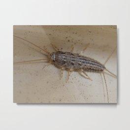 silverfish Metal Print