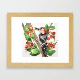 Cranapple Woodpecker Framed Art Print