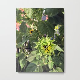 This sunflower is closed until further notice Metal Print