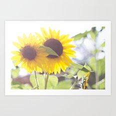 August Sunflower Art Print