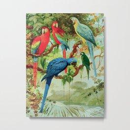 Amazonian Birds August Belem Brazil Colorful Tropical Birds Scientific Illustration Parrots Metal Print