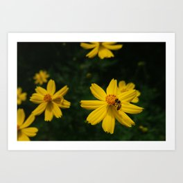 Yellow flower and insect Art Print