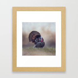 WIld Tom Turkey in the grassland Framed Art Print