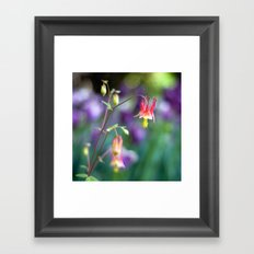 Columbine Flower Framed Art Print
