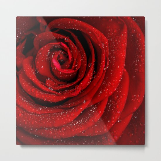 Red rose with sparkling droplets- Beautiful elegant Roses Metal Print