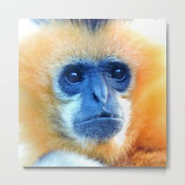 Mother gibbon Metal Print
