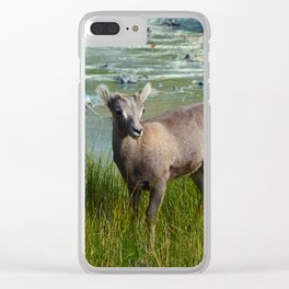 Baby big horn sheep in Jasper National Park Clear iPhone Case