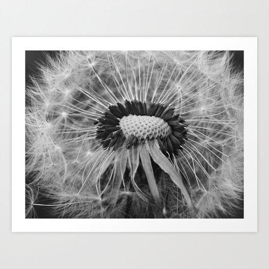 Dandelion Black and White Photography | Nature Art | Plant | Botanical | Wish Art Print