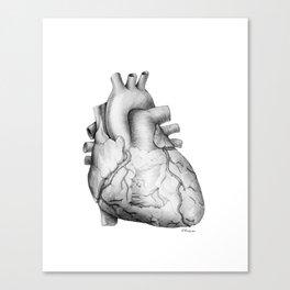 Anatomical Heart 101 Canvas Print