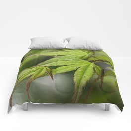 Japanese Maple in Green Comforters