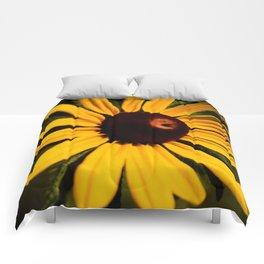 Rudbeckia Comforters