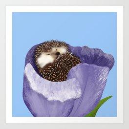 Sleeping Hedgehog In A Purple Tulip / Spring Decor Art Print