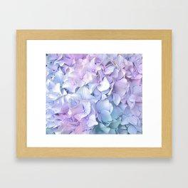 Soft Pastel Hydrangea Framed Art Print