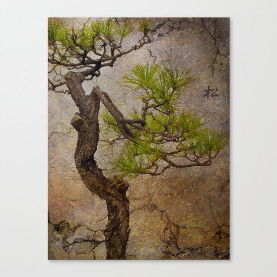 Matsu Canvas Print