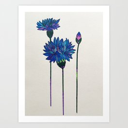 The Cornflower print Art Print