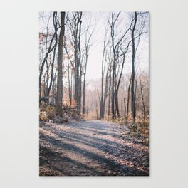 Forrest Shadows Canvas Print