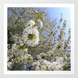 White Blossoms, Springtime Art Print