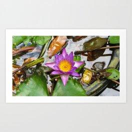 Purple Lotus Art Print