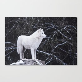 White Wolf Winter (Color) Canvas Print