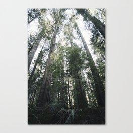 homboldt redwoods 2 Canvas Print