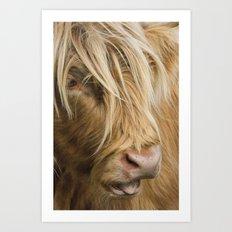 Highland Cow Portrait Art Print