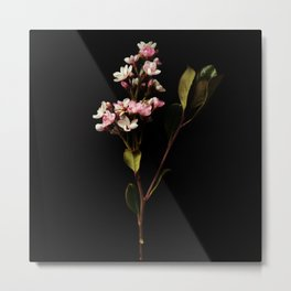 Dramatic Flower Metal Print