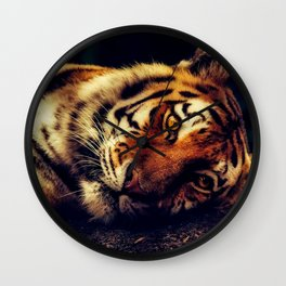 The Powerful Tiger at Rest Wall Clock
