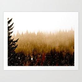 Warm Pines Art Print