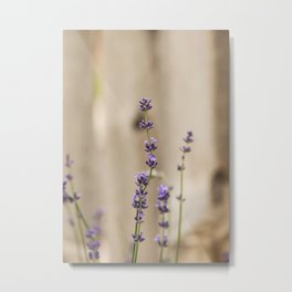 Lavender Buds and Blooms Metal Print