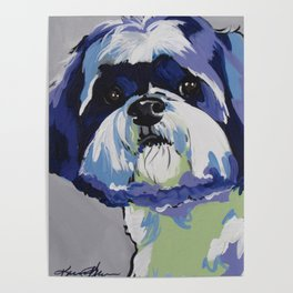Ringo the Shih Tzu Poster