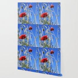 Poppies flower Wallpaper