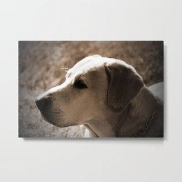 Cute Old Dog Metal Print