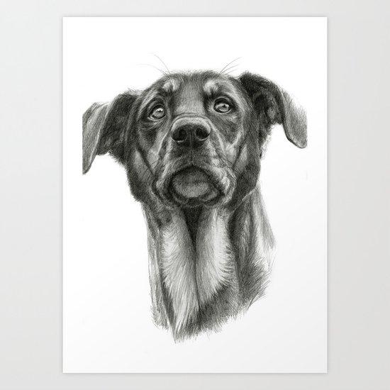 sh-Dog G2009sh-f Art Print