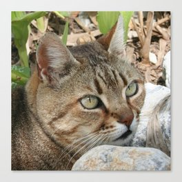 Tabby Cat Portrait Canvas Print