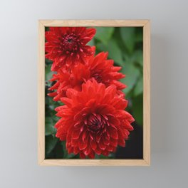 Fresh Rain Drops - Red Dahlia Framed Mini Art Print