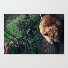 Sheltered Reality Canvas Print