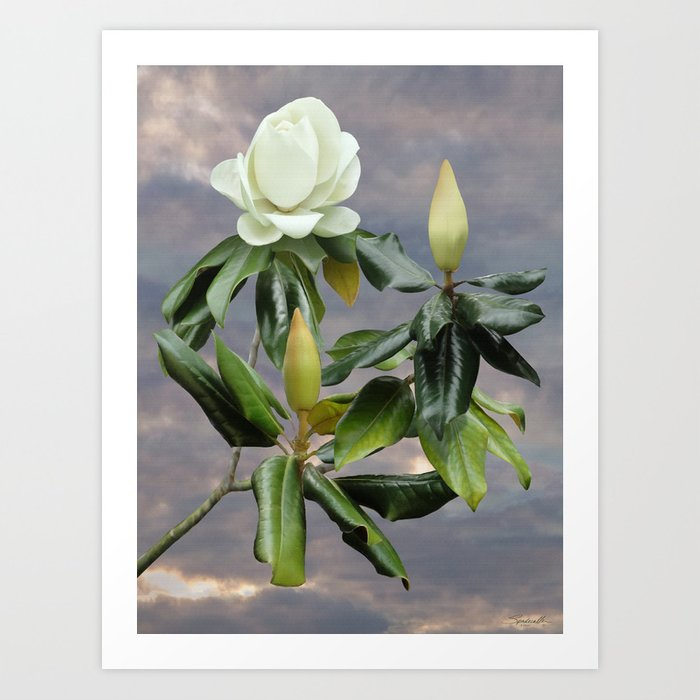 White Magnolia Tree Art Print By Spadecaller Society6