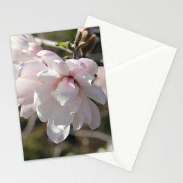 Star Magnolia Stationery Cards