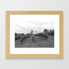 Grape Vines in Mono Framed Art Print
