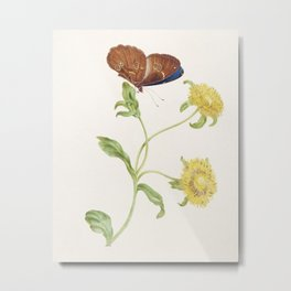 Butterfly on the Bud of a Yellow Flower Plant (1965) by Maria Sibylla Merian . Metal Print