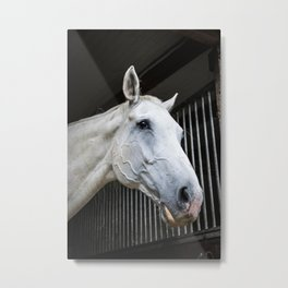 horse by Michal GADEK Metal Print